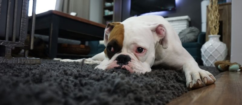 tips-to-remove-pet-odors-and-stains-1030x687-1